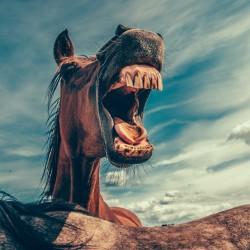 horse-868971_1920
